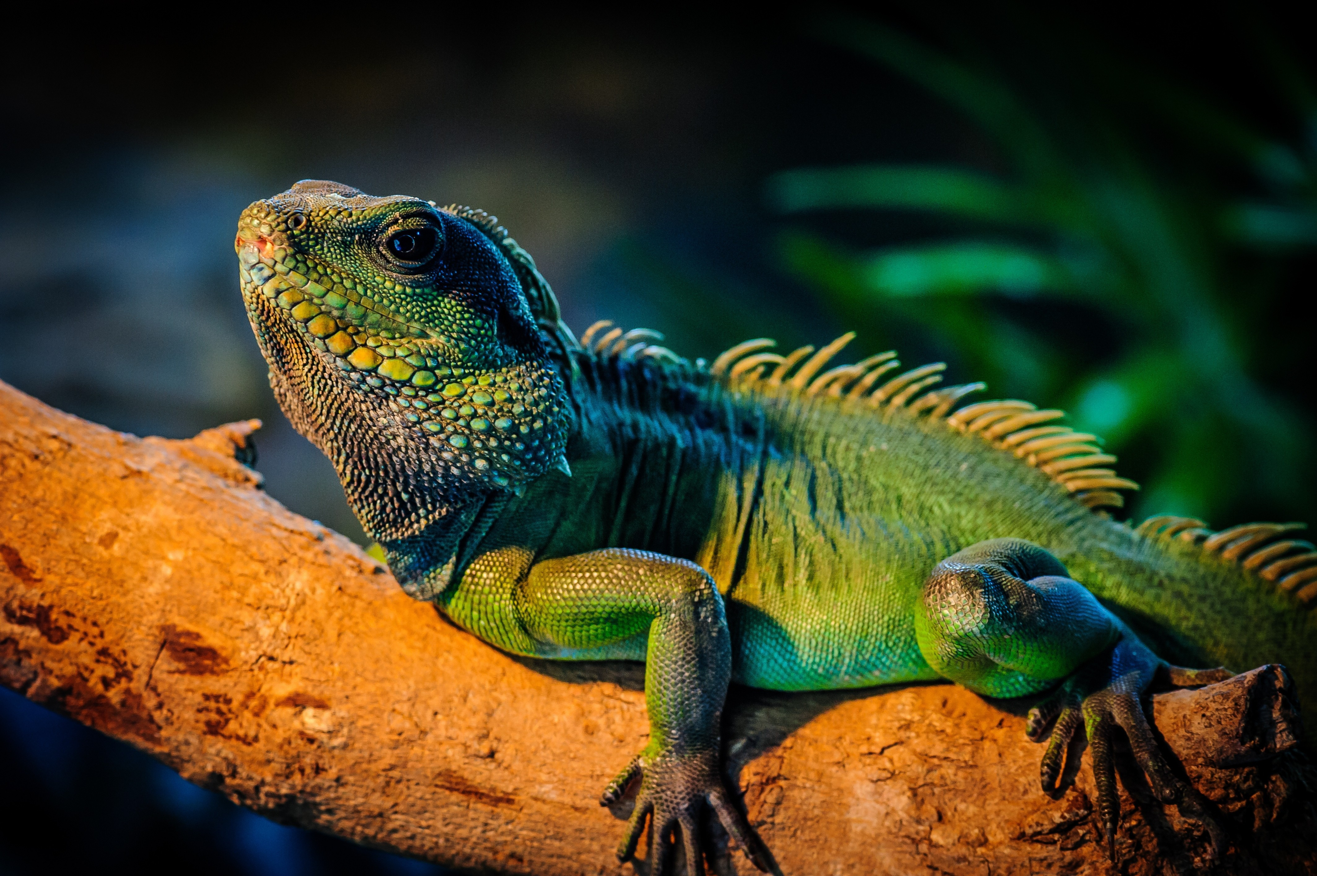 природа животные рептилия  № 234963 без смс