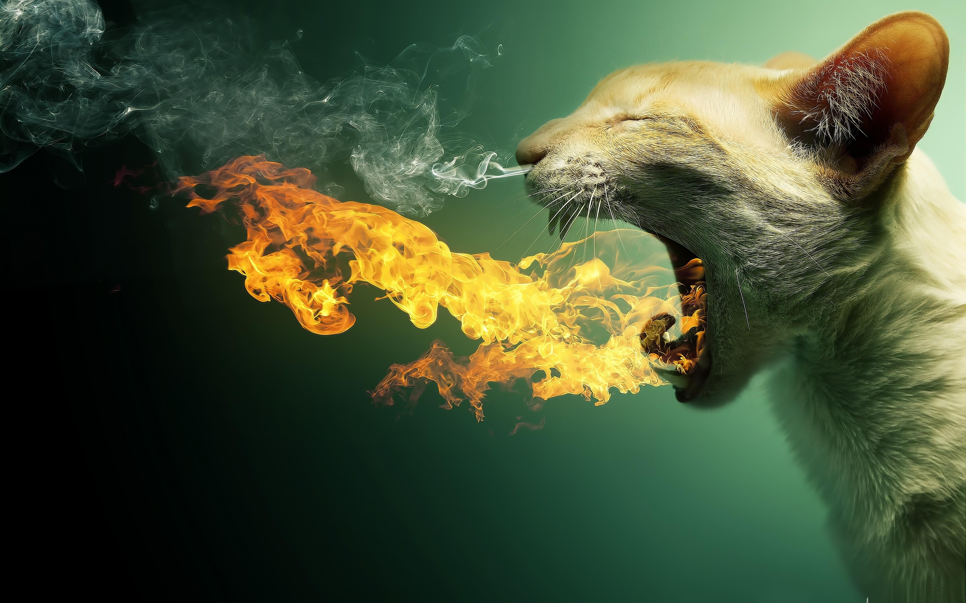 Огненный кот обои для рабочего стола