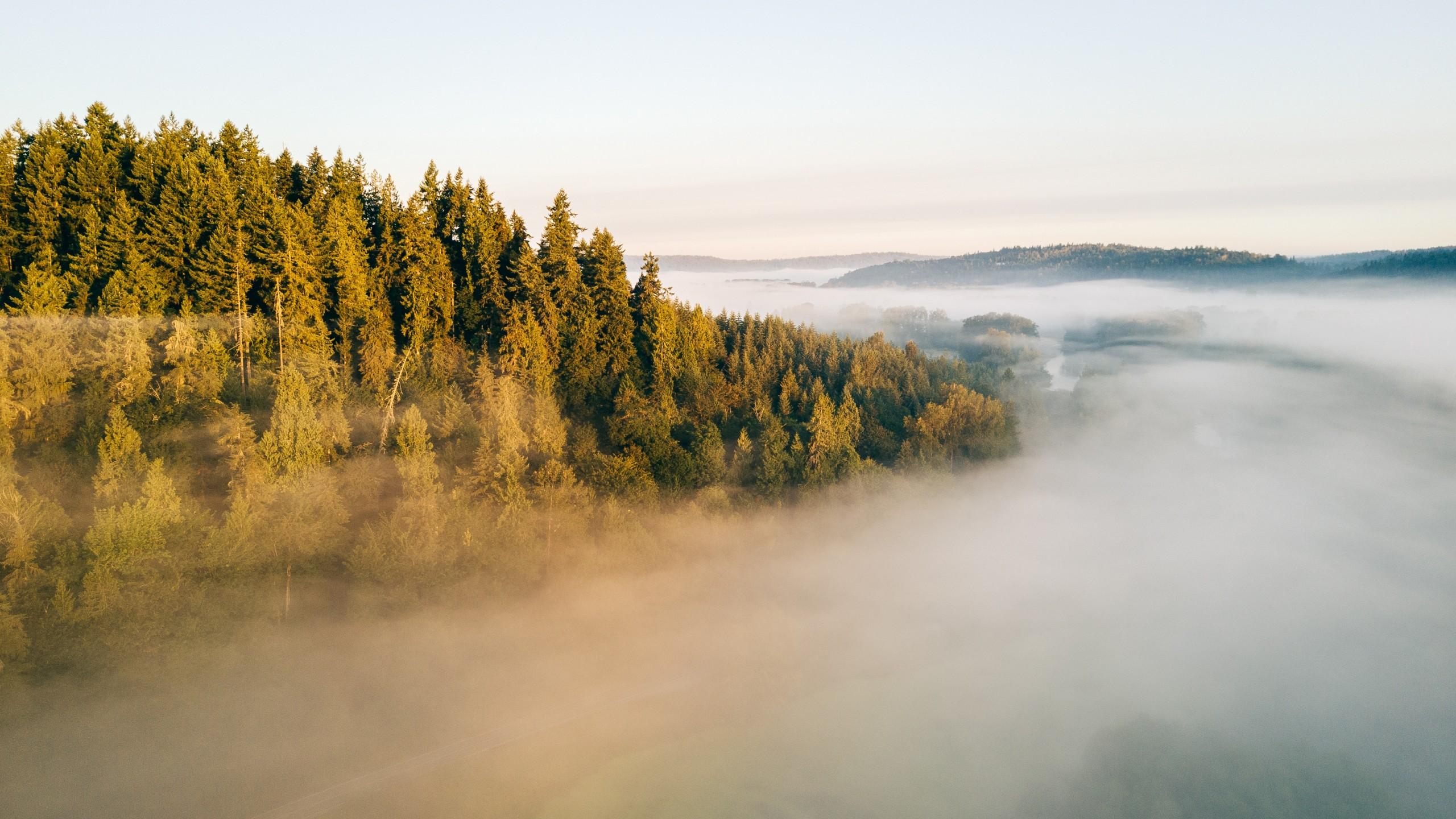 Обои елка, туман, утро. Природа foto 13