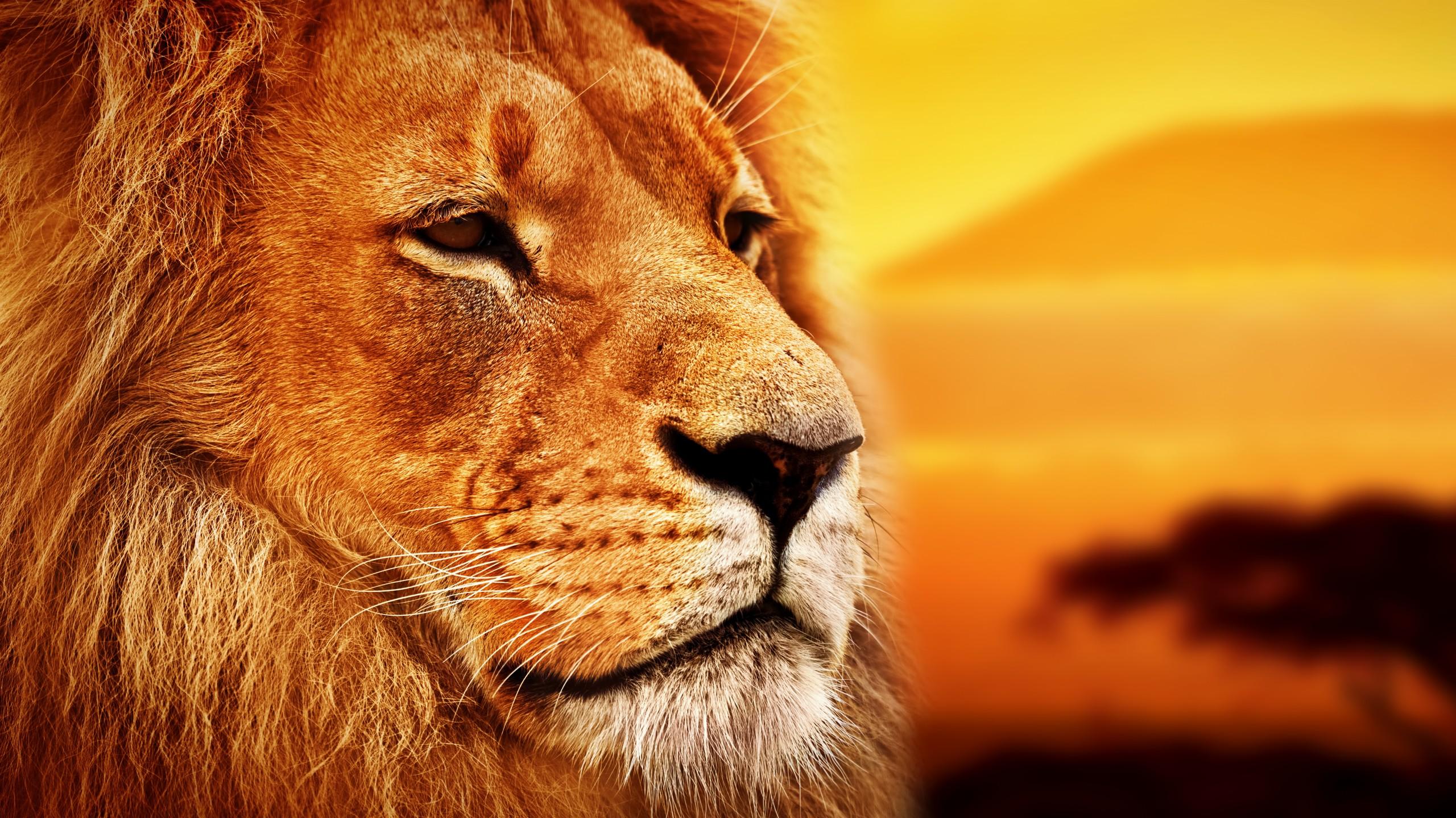 произошло картинки на рабочий стол люди и львы главу поселения
