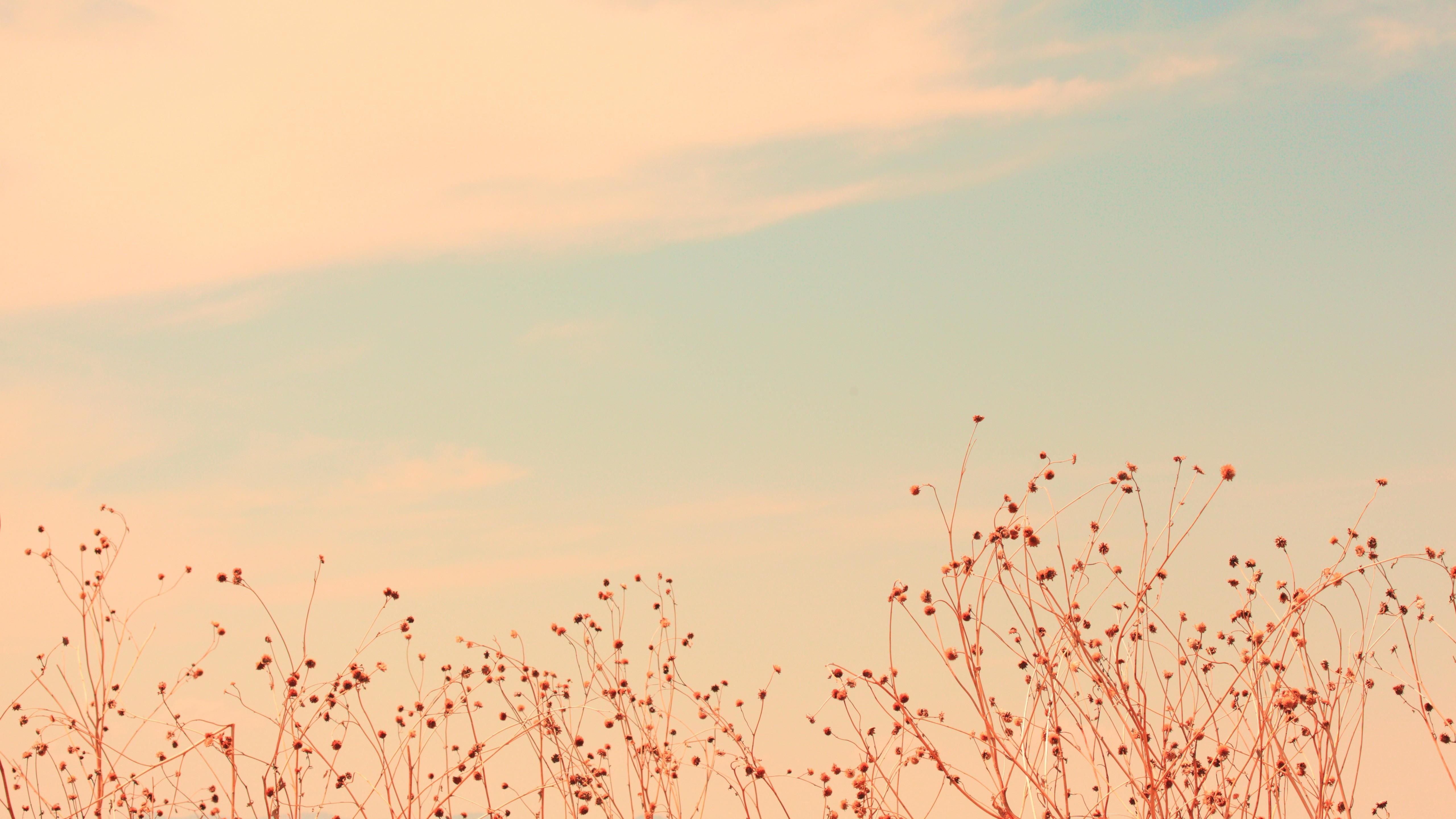 полевые цветы небо облака бесплатно