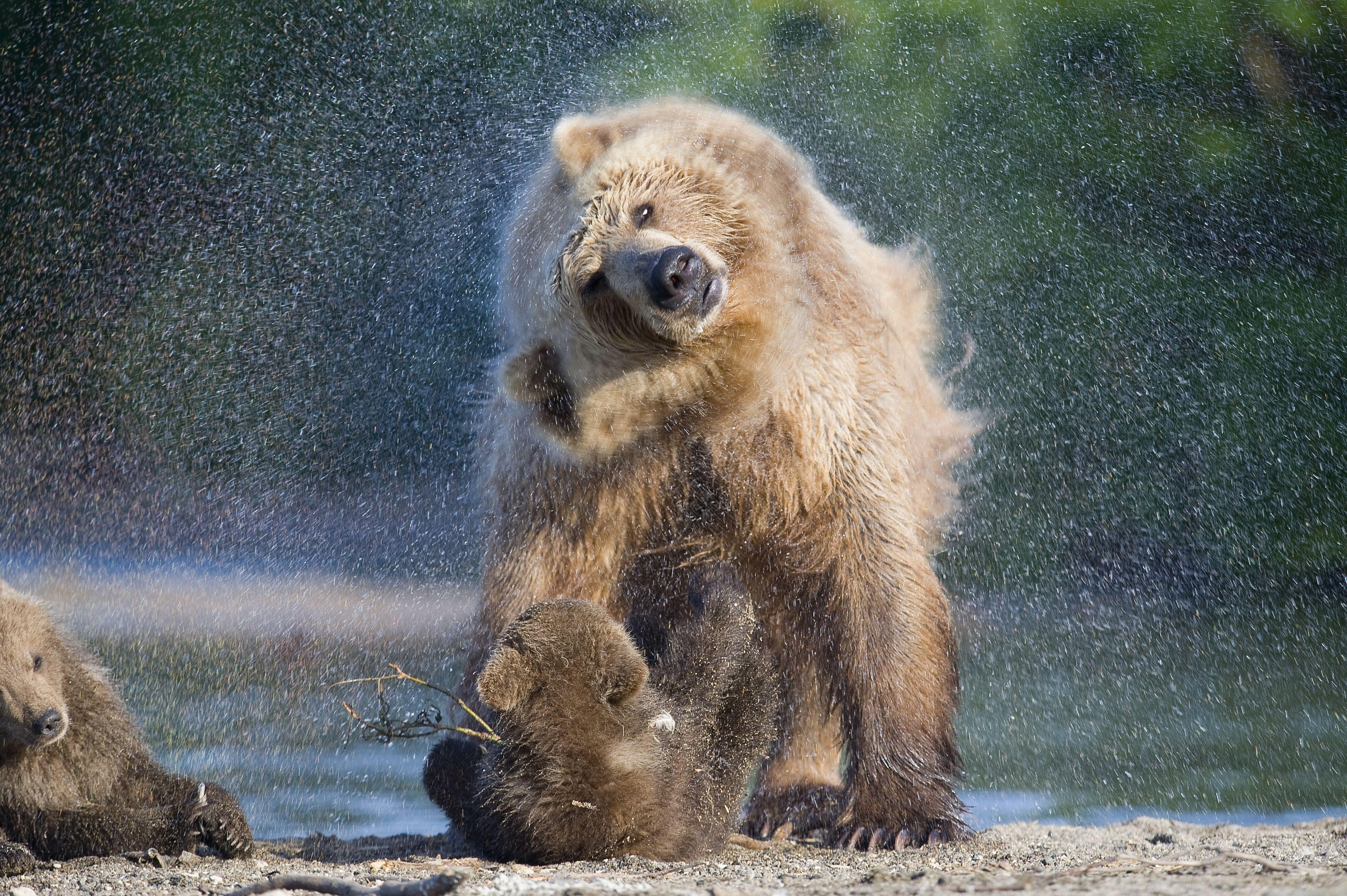 Фото природы животных россии 3