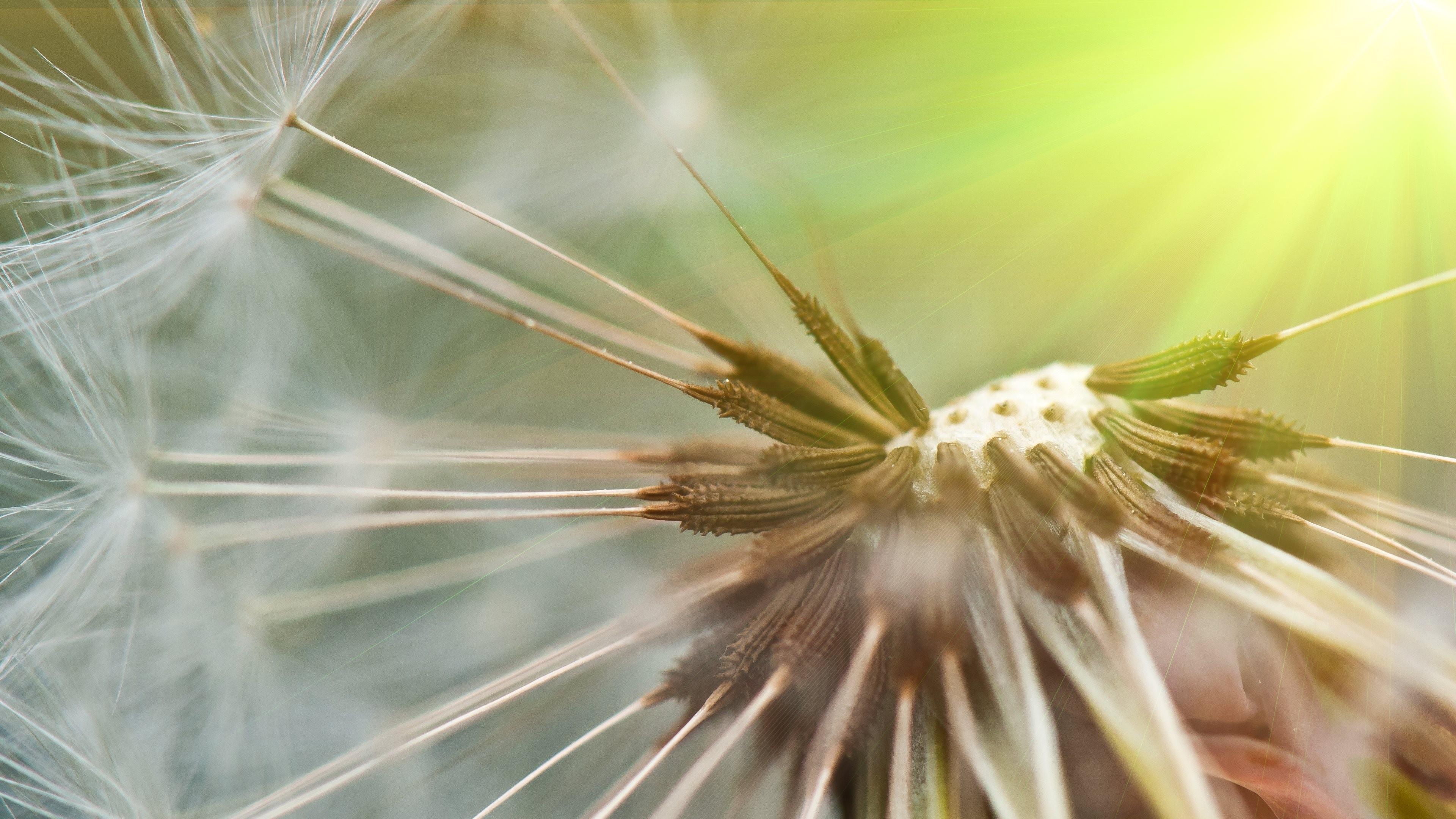 южный цветок фото