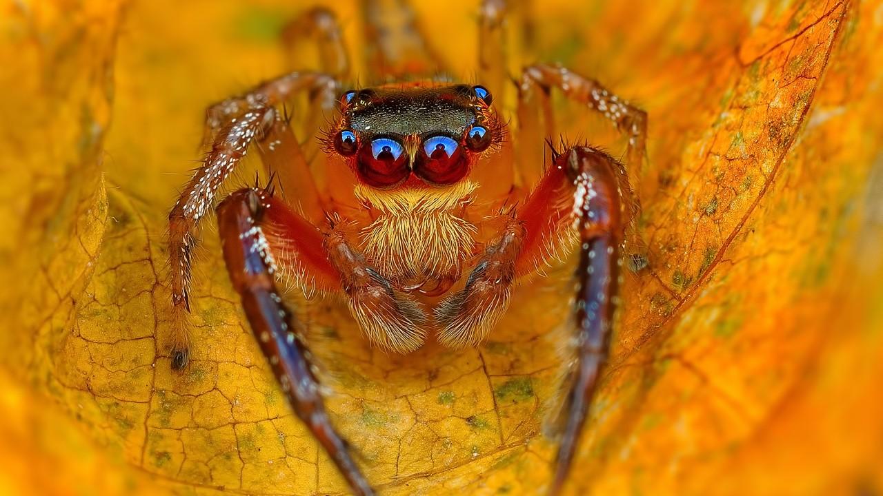 Обои насекомое, паук, лист. Макро foto 9