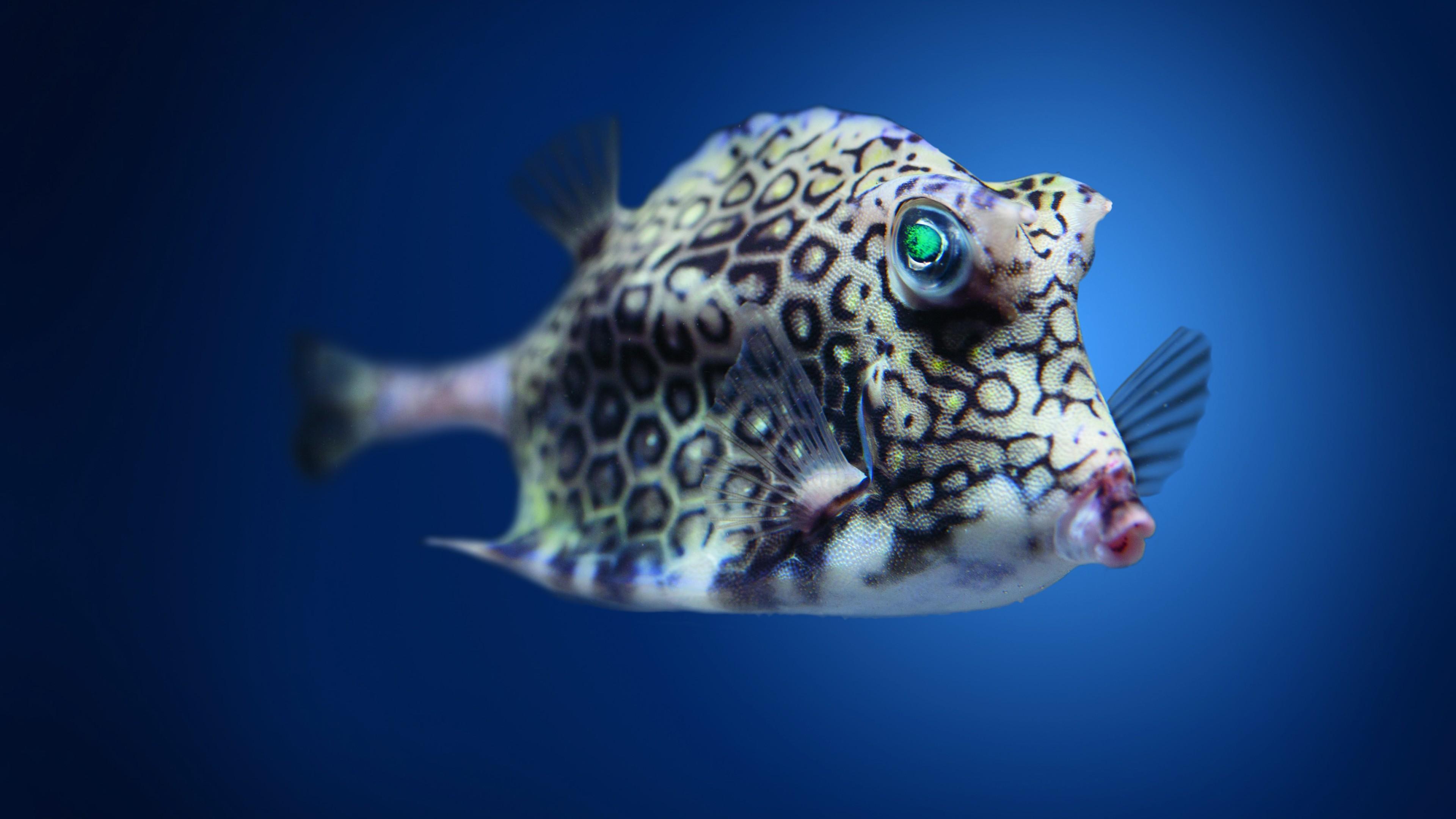 Смешные рыбы, картинка