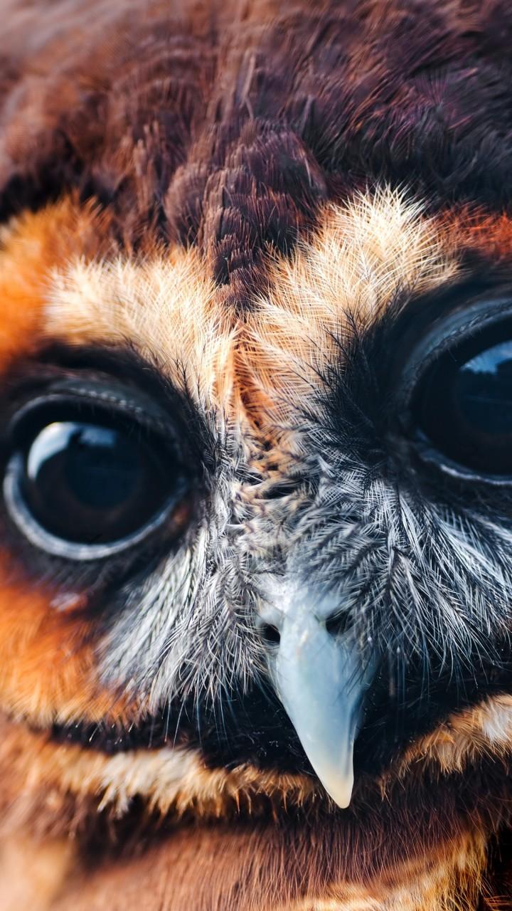 Обои сова, 5k, 4k, милые, глаза, Owl, 5k, 4k wallpaper ...
