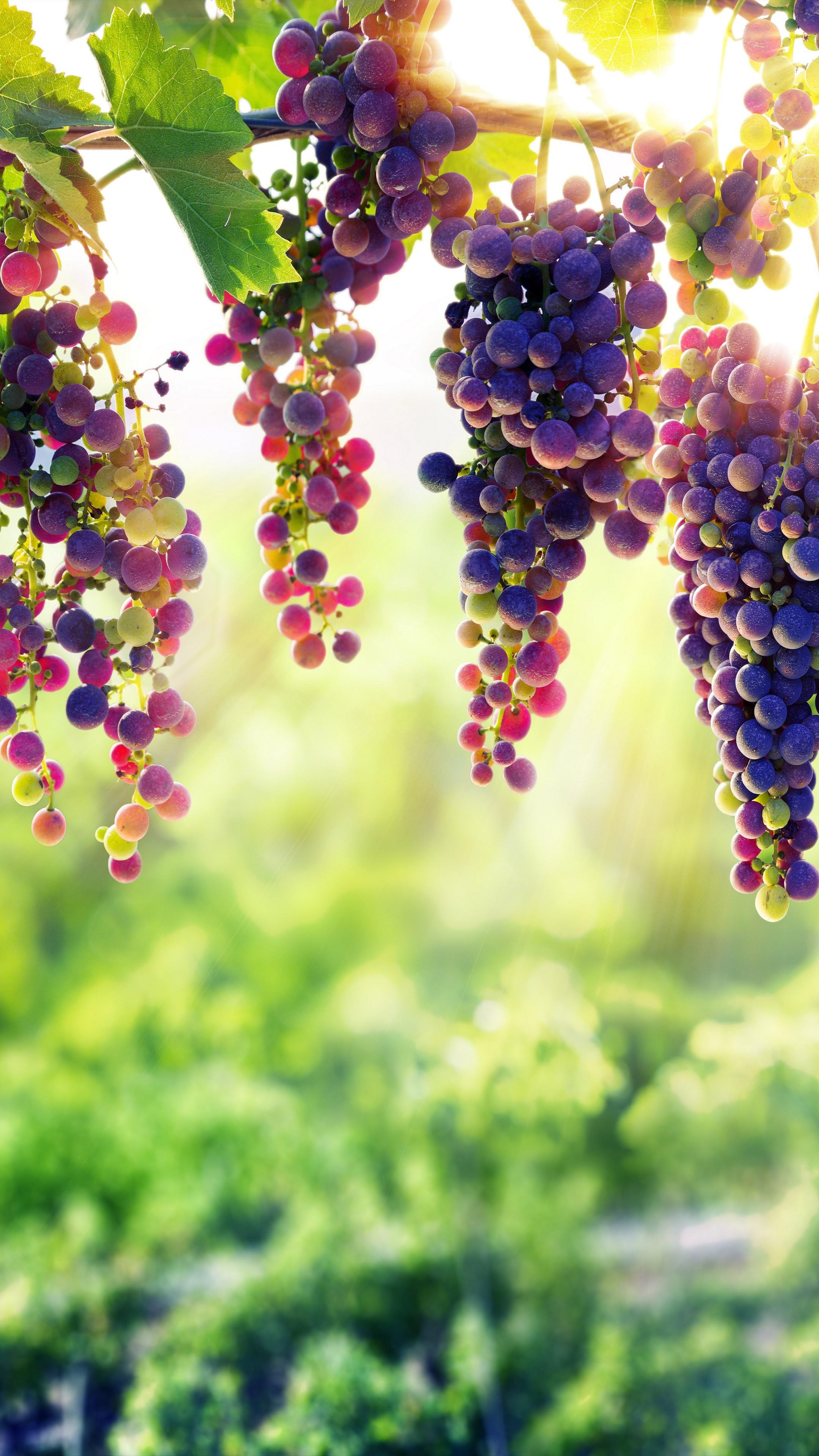 нужно виноградная открытка картингом могут как