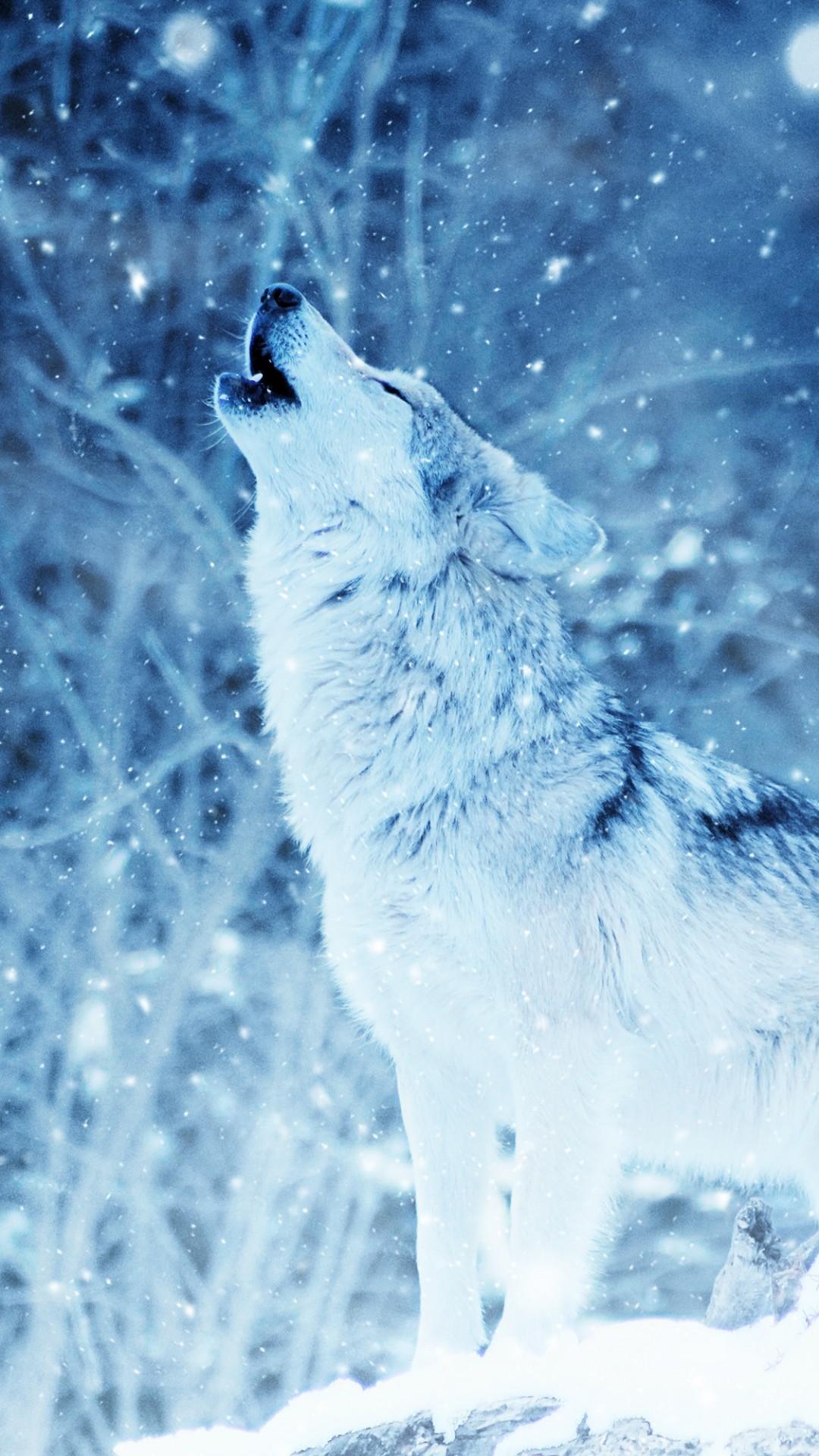 Обои волки. Животные foto 14