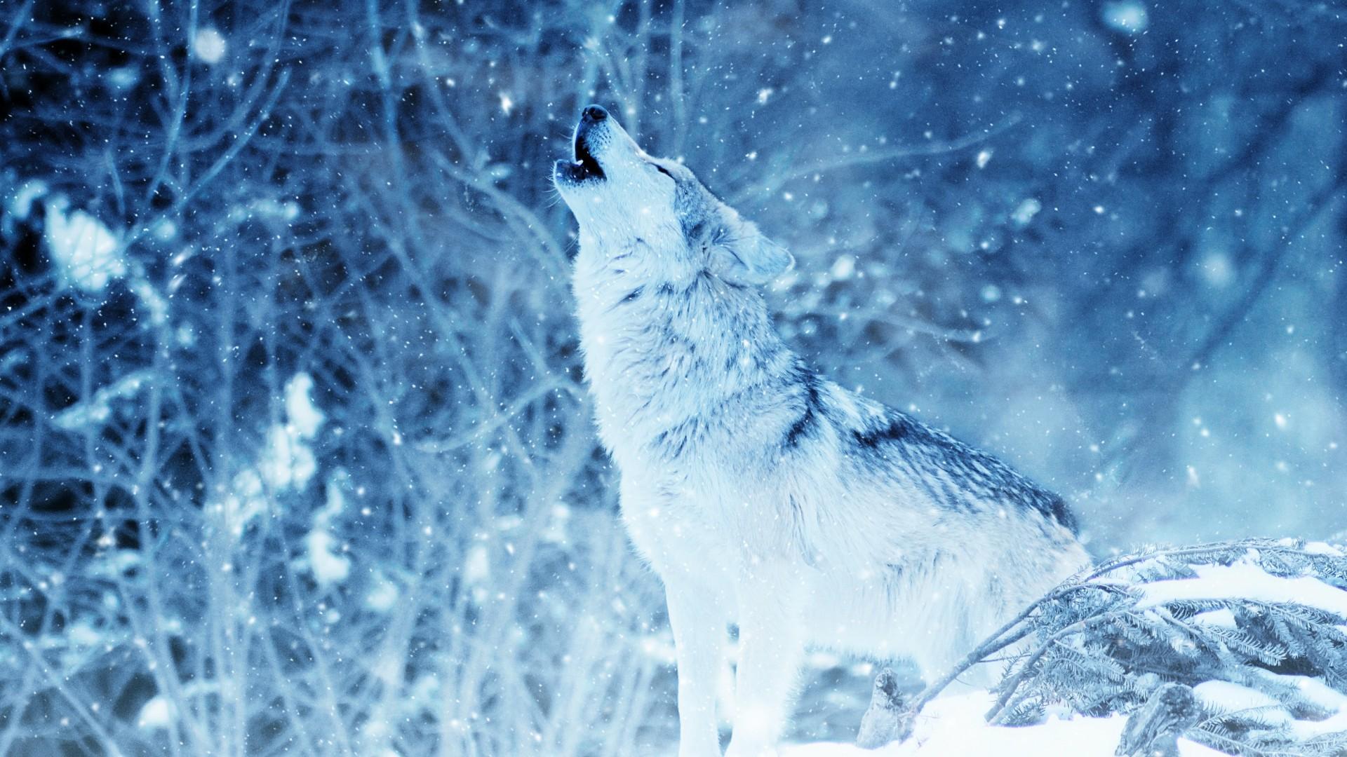 Картинки снежные волки